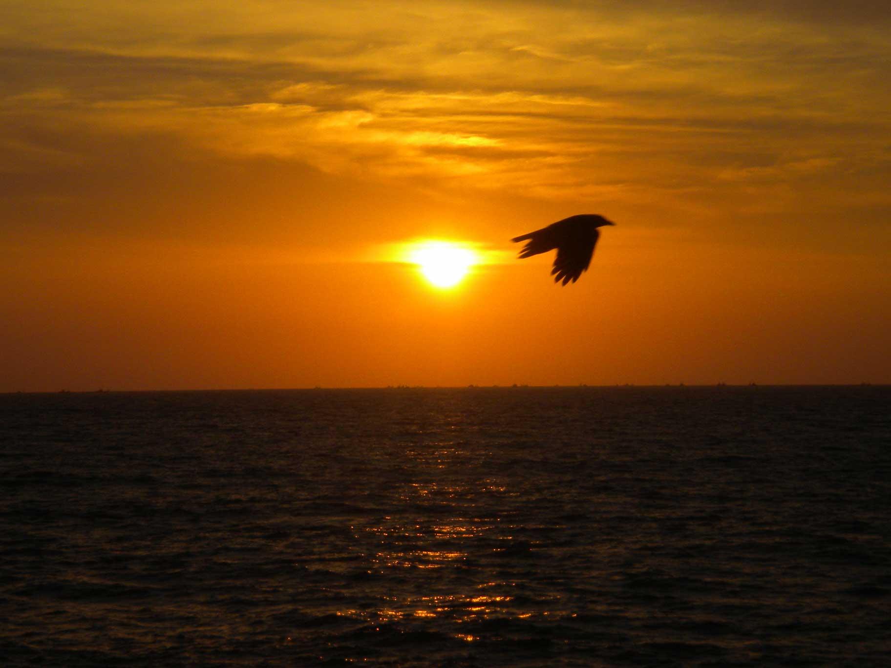 Vogel am indischen Ozean
