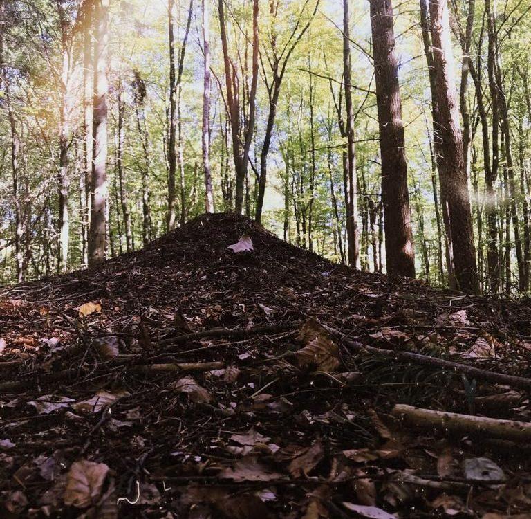 Ameisenhügel im Wald