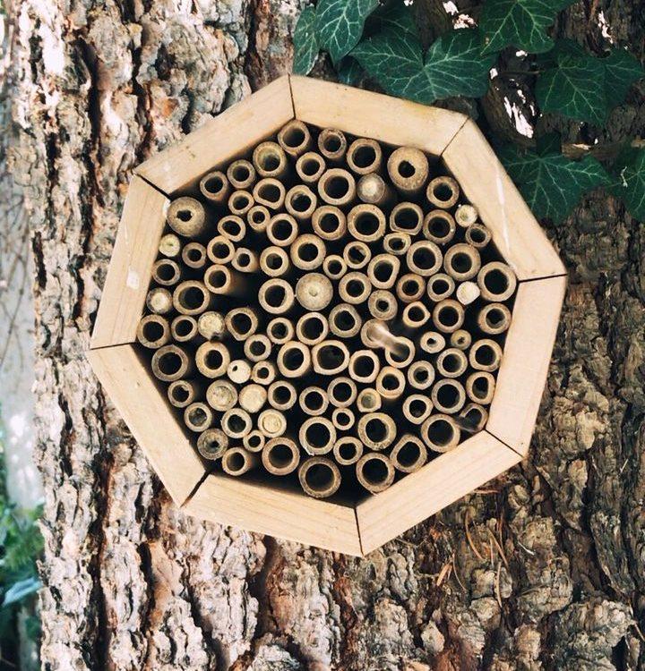 Insektenhotel wird von Mauerbienen besucht
