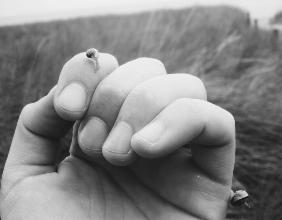 Schnecken auf einer Hand