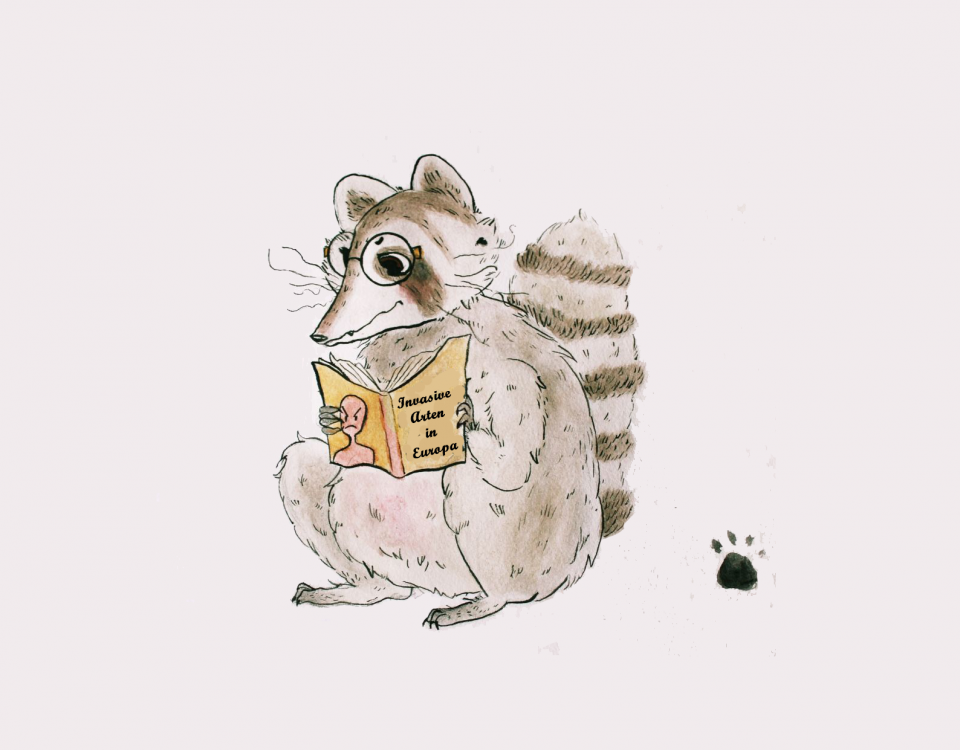 Selbstgezeichneter Waschbär mit Buch in der Hand