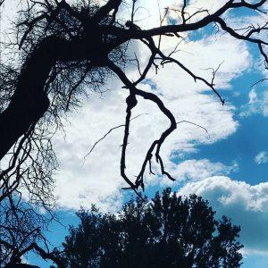 AKUPARA-Tierschutz-Artenschutz-Natruschutz-oesterreich-Licht-Verschmutzung-Baum