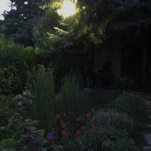 AKUPARA-Tierschutz-Artenschutz-Natruschutz-oesterreich-Licht-Verschmutzung-Garten-1