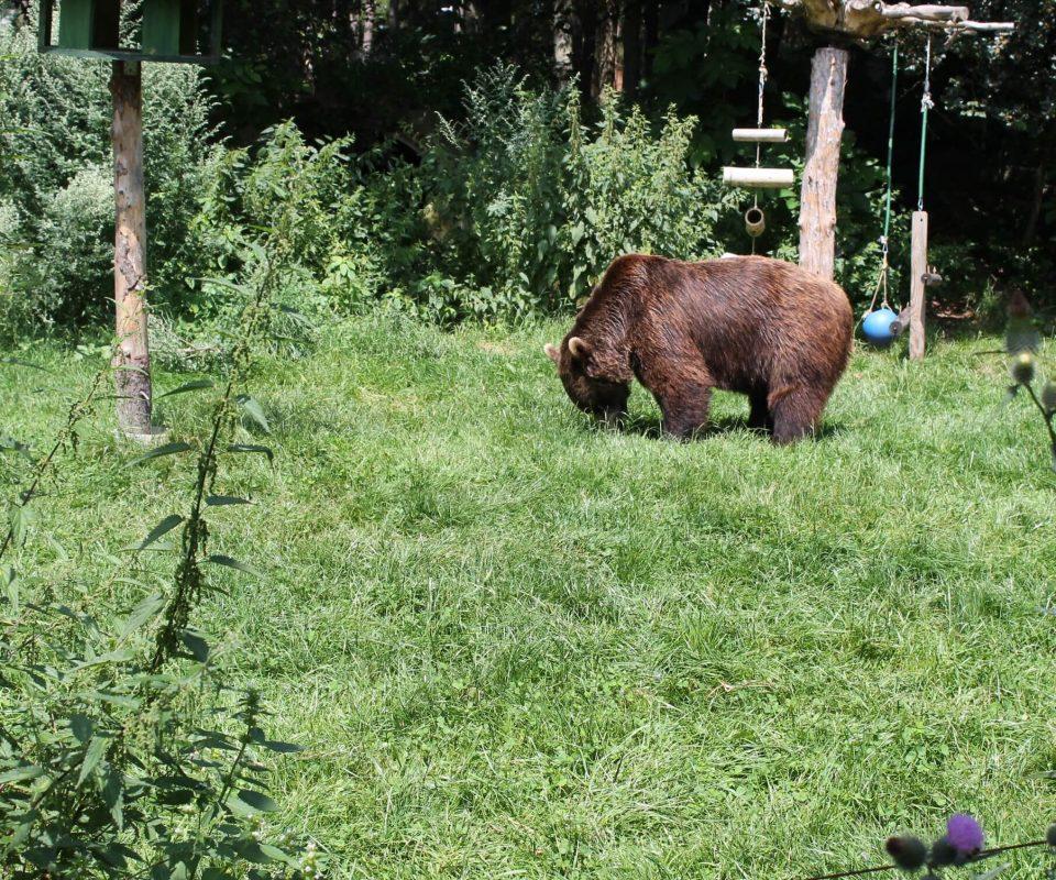 Bär im Bärenwald Waldviertel von VIER PFOTEN