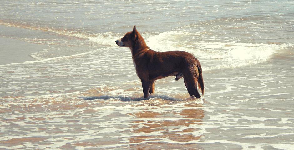"""Hunde steht im Meer und schaut in die Ferne, darüber steht das Wort """"Dilemma"""""""
