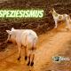 Schwein und Hund stehen auf einem Feldweg, darüber der Schriftzug Speziesismus