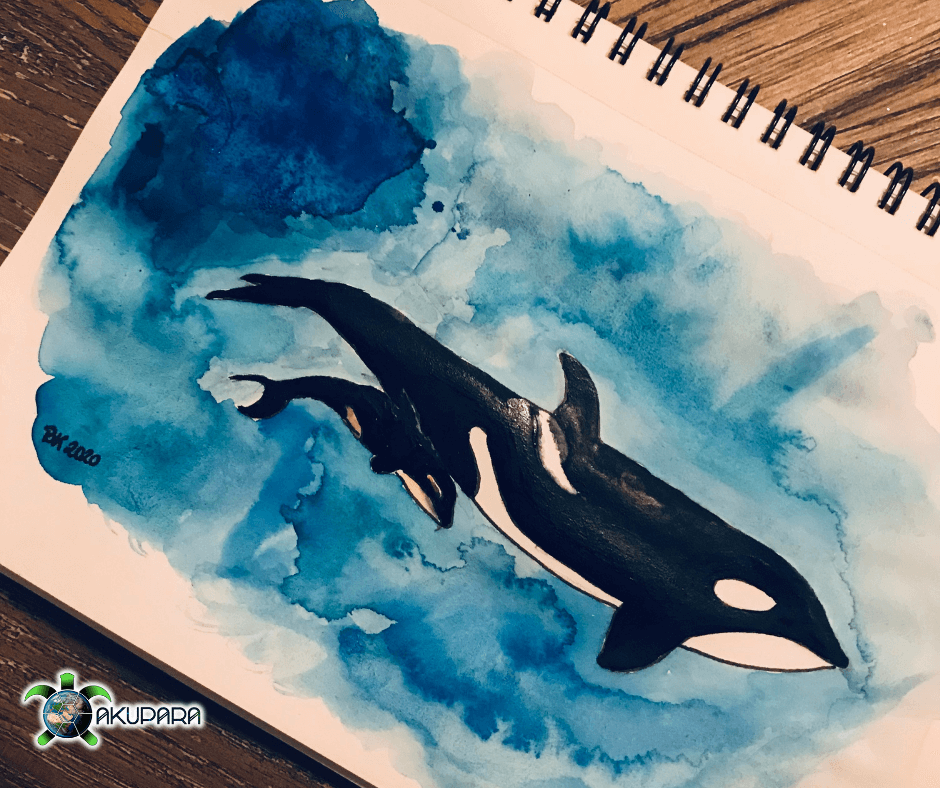 Orca-Mutter mit Kalb gemalt Aquarell