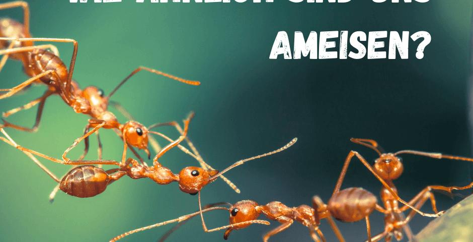 Ameisen ziehen an einem Strang