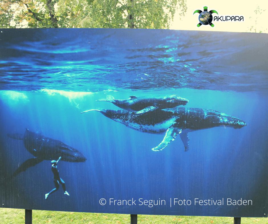 Buckelwalbild auf der Fotoausstellung Baden