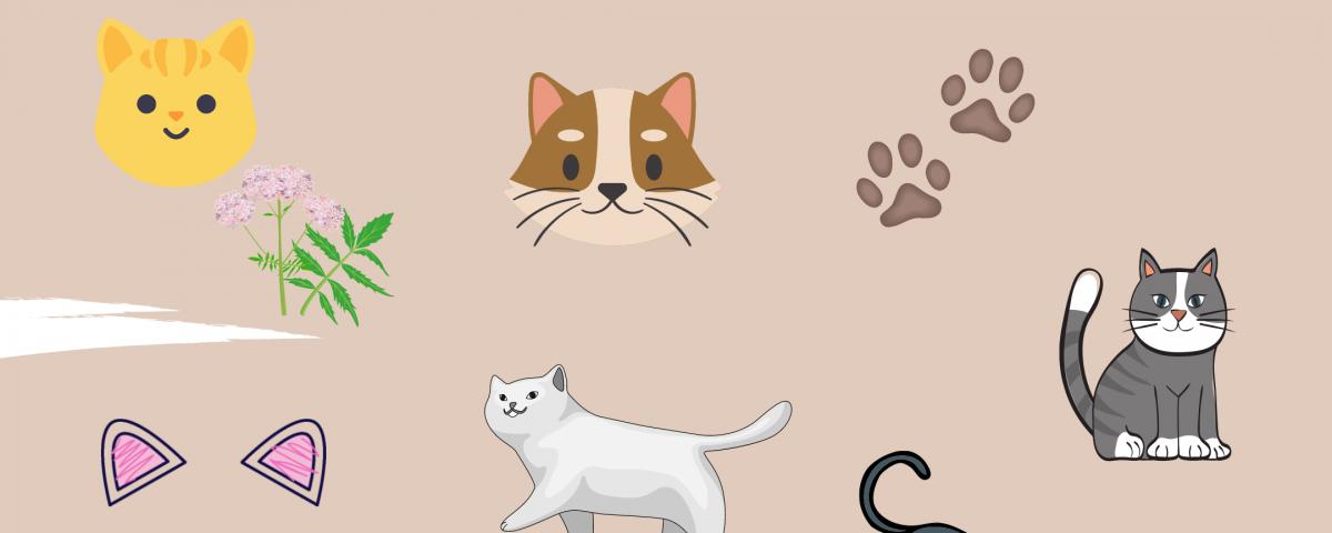 7 Sinne der Katze - Titelbild