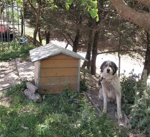 Kettenhund vor Hundehütte auf Kreta